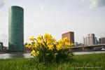 Frankfurt Frühlingspanorama