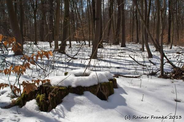 Winterwald in der Frühlingssonne