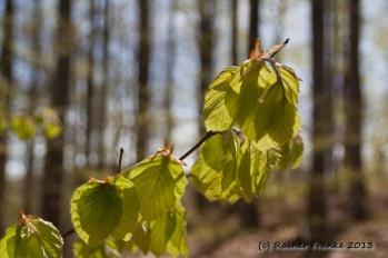 Fühling im Wald