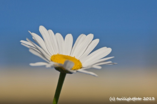 Blume zum Anlass