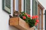Blumenkatze - Katzenblume