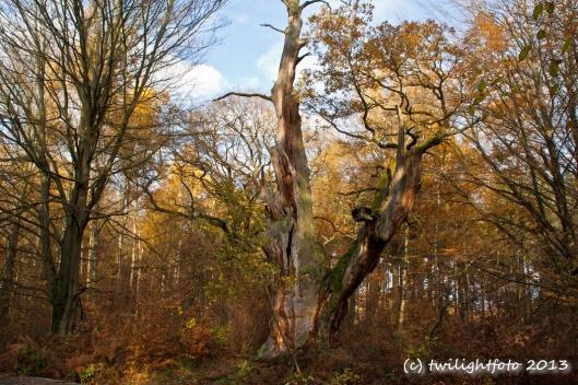 Baumruine im Sabawald