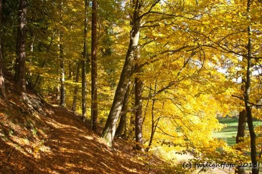 Waldweg bei Paulinzella