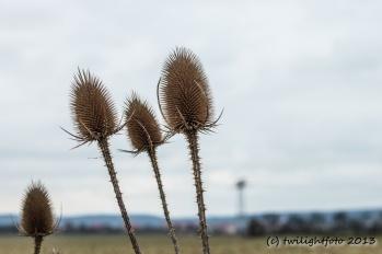 Disteln im Herbst