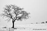 Baum im Winter - sw