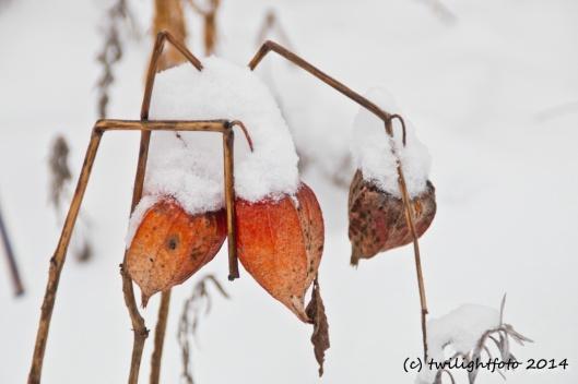 Lampions im Schnee