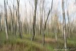 Malen mit Licht - Birkenwald