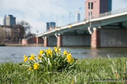Frühling am Main