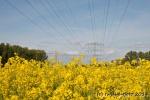 Rapsfeld steht unter Strom