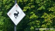 Vorsicht Hirsche