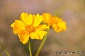 Gelbe Herbstblumen