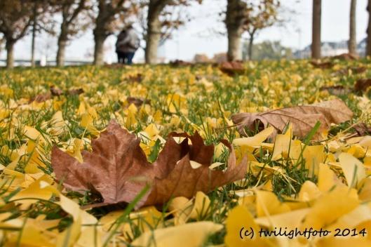 Herbst am Main