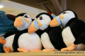 Puffins im Winter