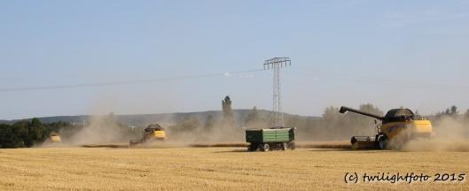 Getreideernte - Teamwork