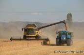 Getreideernte - Umladen