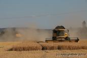 Getreideernte - Gegenverkehr