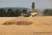 Getreideernte - Kollisionskurs