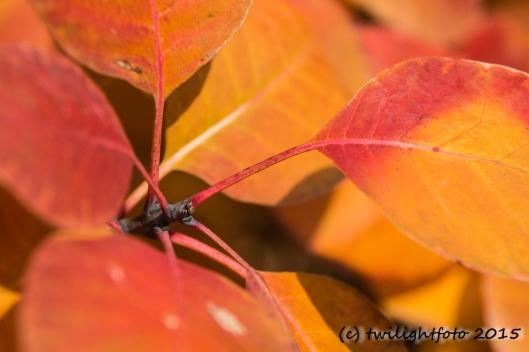 Herbstfarben in Rot