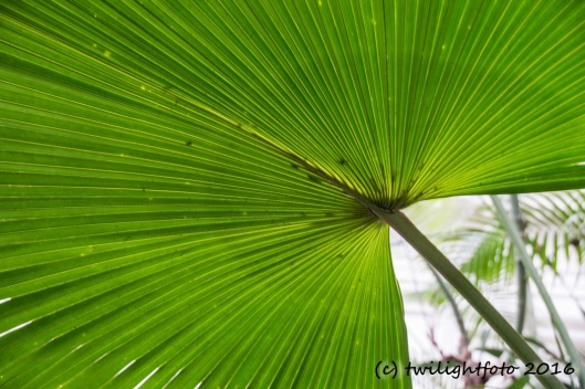Palmwedel im Palmenhaus