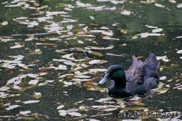 Wasservogel