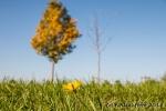 Gelbe Blume auf Herbstwiese