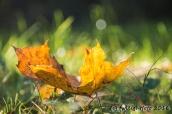 Herbstlaub auf der Wiese