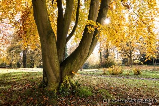 Baum in herbstlichem Look