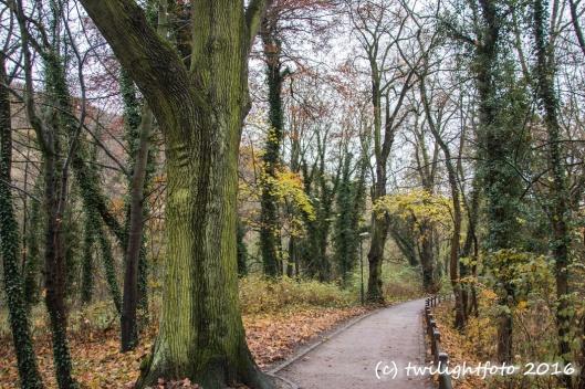 Weg im Herbst