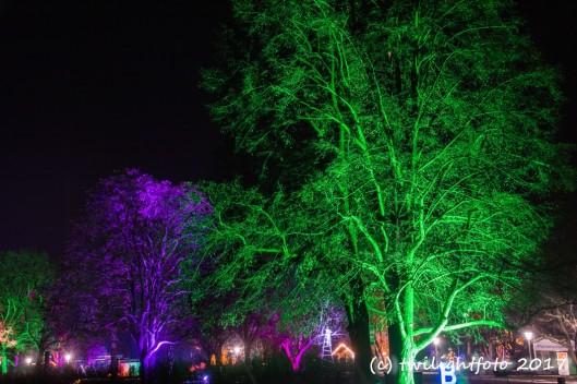Winterleuchten - Bäume im Park