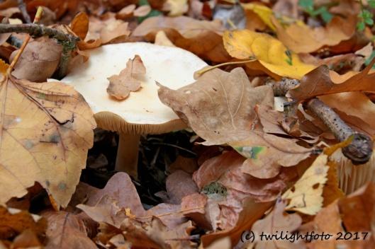 Versteckspiel im Herbst