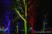 Wald aus LIcht und Farben