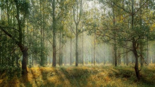 Wald - (c) pixabay.com