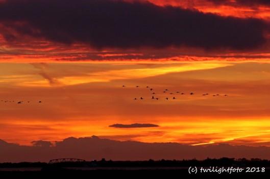 Kraniche im Sonnenuntergang über der Insel Kirr