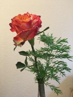 Eine Blume für den Autor