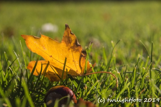 Buntes Blatt in der Sonne